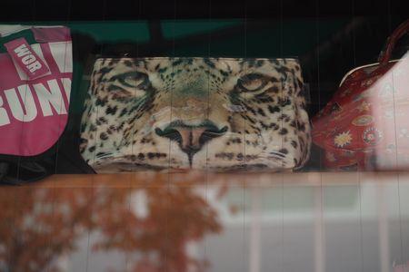 猫の鞄3 (C)表参道・青山・原宿・外苑前・渋谷・源保堂鍼灸院 肩こり・腰痛・頭痛・生理痛など