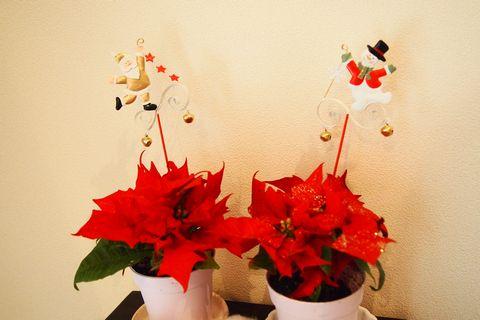 クリスマスの飾りとポインセチア (C)表参道・青山・原宿・外苑前・渋谷・都内・源保堂鍼灸院 肩こり・腰痛・生理痛・頭痛など