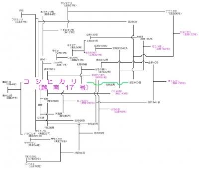 銘柄米の系譜