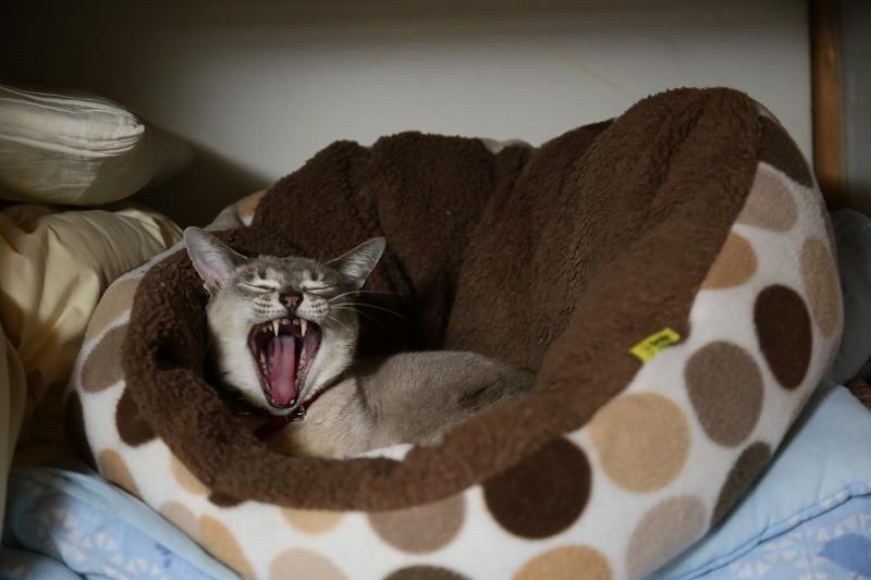 ミーコ 寝起き