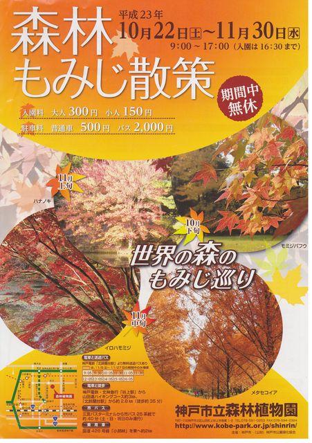 la-promenade-des-feuilles-colorees1.jpg