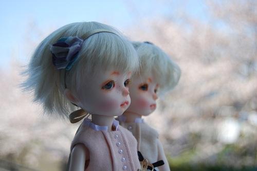 sakura2012-bkpp_2.jpg