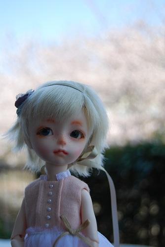 sakura2012-bkpp_3.jpg