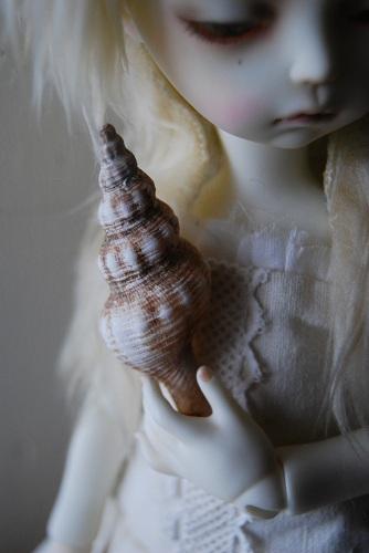 tsuki-shell4.jpg
