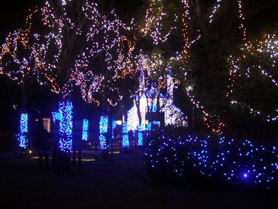 クリスマス・イルミネーション (9)
