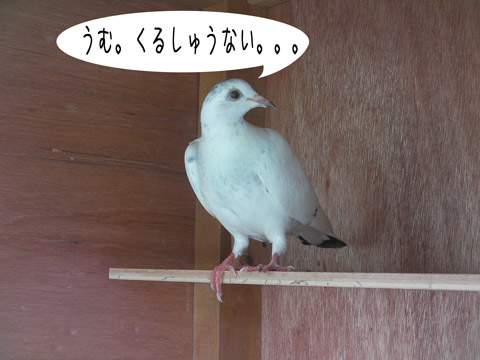 hatogoya kansei 004