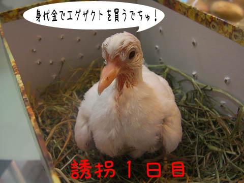 yuukai 1day 001