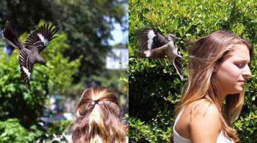 animals_attack_people_20.jpg