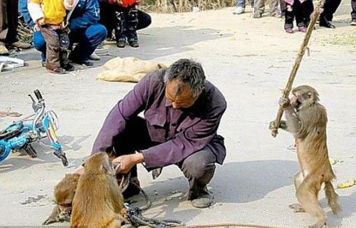 animals_attack_people_30.jpg