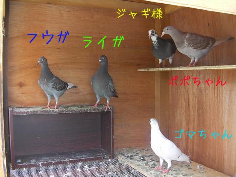 hatogoyano5wa001.jpg