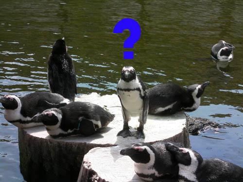 penguin001.jpg