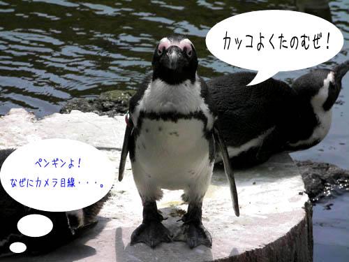 penguin002.jpg