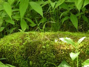 森のベッド