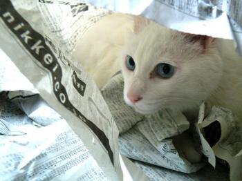 新聞紙の下