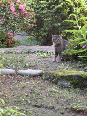 ライバル猫
