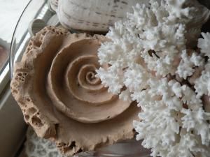 うずまき貝の粘土作品