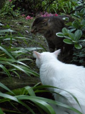 茶色ネコもよそ見