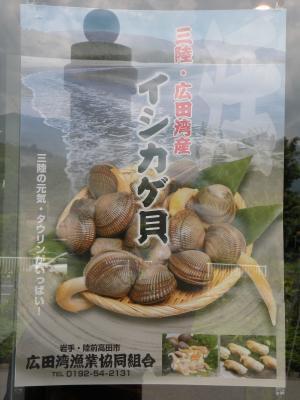 イシカゲ貝ポスター