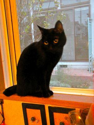 黒猫らんらん