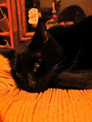 黒猫きらりん
