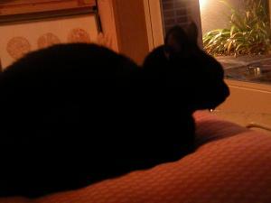 黒猫のしずく