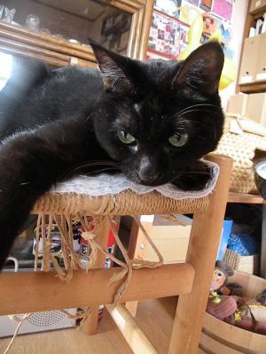 黒猫日々かわいく