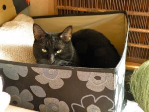 黒猫 箱のなか
