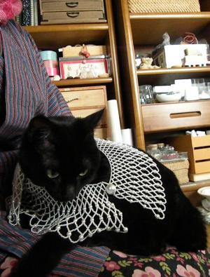 黒猫とレース襟
