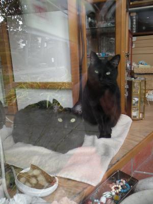 黒猫姉妹窓ごしに