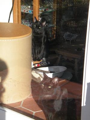 黒猫姉妹・最後の朝