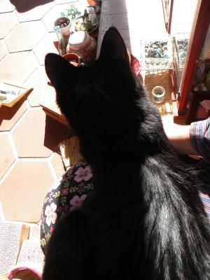 黒猫姉 お膝の上