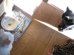 黒猫姉とシロ 微妙な距離