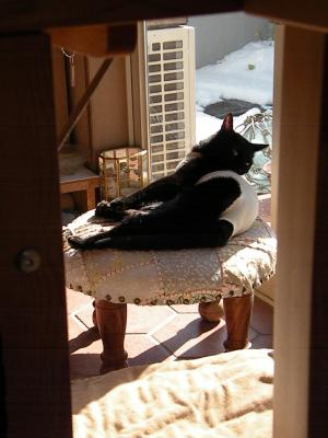 姉ネコさん 椅子の上で体を舐める2