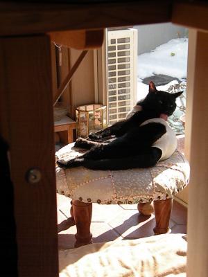 姉ネコさん 椅子の上で体を舐める1