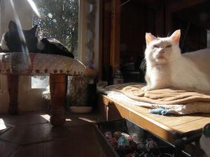 二人一緒に 日をあびて