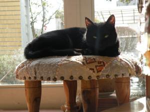 黒猫キキ窓のそば