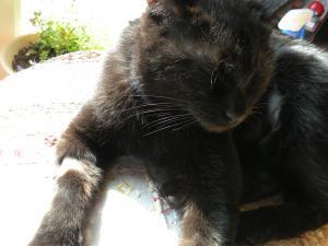 黒猫姉 キキ 日だまりで