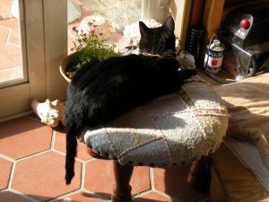 黒猫キキ しっぽたらり
