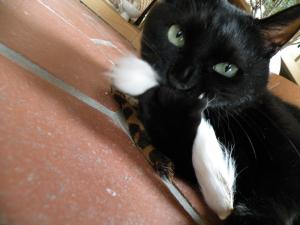 黒猫キキ はむはむ