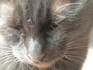 黒猫キキ アップ