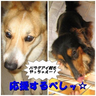 ガンバレ!!日本ッ!!!by・まろん&銀時。