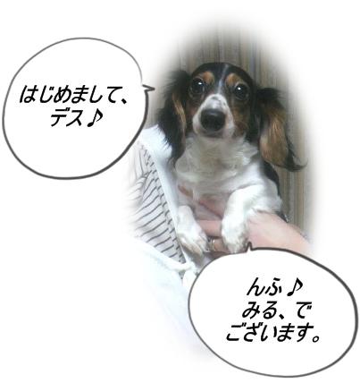 moblog_d864bf22[1]