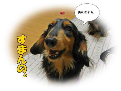 DSCN0681_convert_20131127203907.jpg