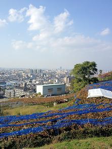 カタシモ35 景色大(2)