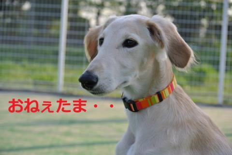 038+-+繧ウ繝斐・_convert_20120503004216