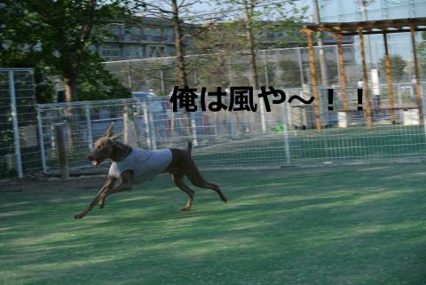 031+-+繧ウ繝斐・_convert_20120503003929