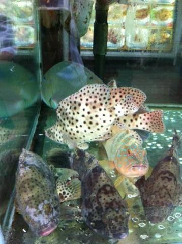 ガルーパって魚