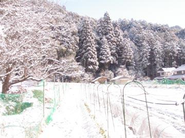 01_20120203224637.jpg