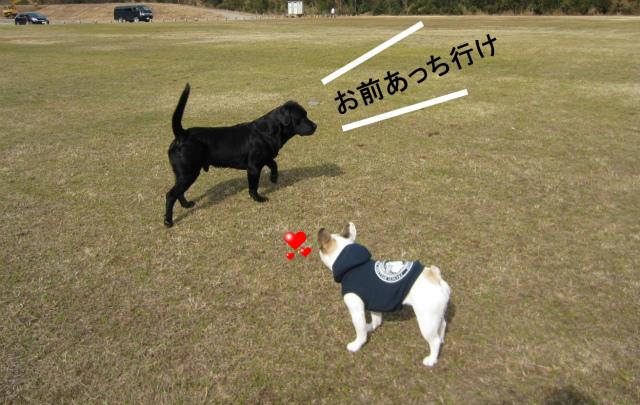sIMG_0087 くろらぶ