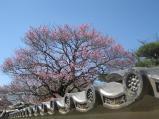 2011/3/29 弘道館3